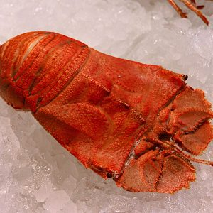 Cooked Moreton Bay Bugs