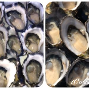 Pacific or Rock Oysters – Large – Freshly Shucked (Australia)