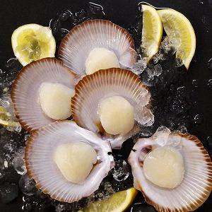 Scallop Half Shell – Roe OFF (Bundaberg, QLD) – FROZEN
